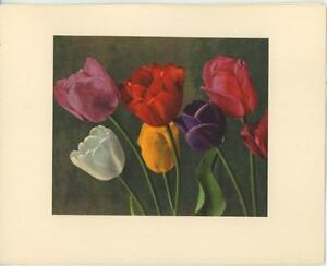 VINTAGE-GARDEN-FLOWERS-BOTANICAL-TULIPS-LITHOGRAPH-NOTE-CARD-ART-OLD-PRINT