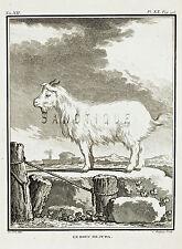 "De Seve's Animals (Buffon) - ""LE BOUC DE JUDA"" (GOAT) - Copper Engraving - 1760"