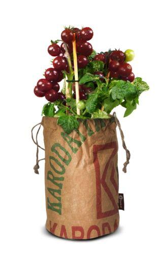 Baza bio-sementi Pomodoro Black Cherry nel riciclati ragbeutel con bio-Terra