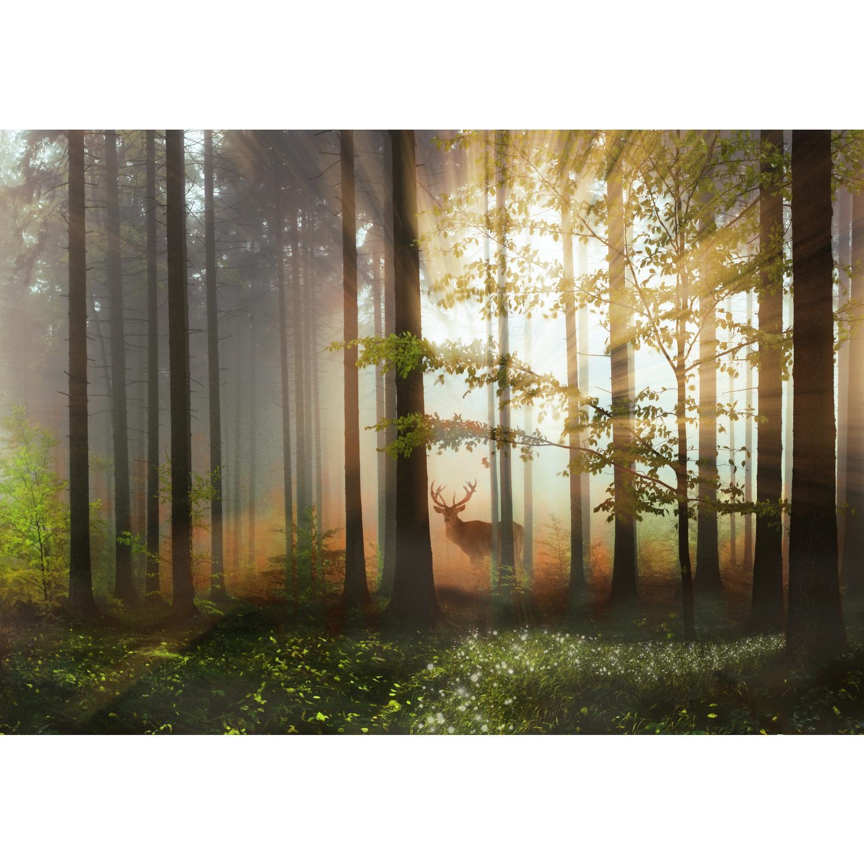 Fototapeten Tapete Fototapete Vlies Wald Hirsch Wandbild XXL 3D Optik Wohnzimmer
