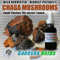 Wild Harvested CHAGA mushroom 20:1 extract TINCTURE 1 oz.  HIGHEST POTENCY!!