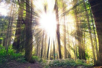 SUN RAYS FOREST LANDSCAPE POSTER PRINT 24x36 HI RES