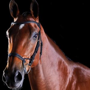 Collegiate ComFiTec Leder Padded Training Bridle Horse Equestrian Equine