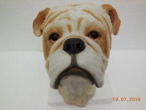 Large-Bulldog-Bust-with-Black-Collar-56823-Sherratt-amp-Simpson
