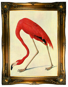 image is loading audubon american flamingo wood framed canvas print repro - Wood Frames For Canvas