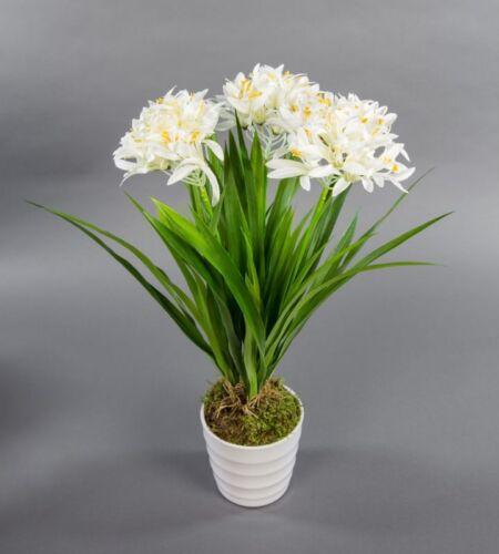 Agapanthus//Bijoux Lily 50 cm blanc en blancs dekotopf DP Art Plantes künstlic