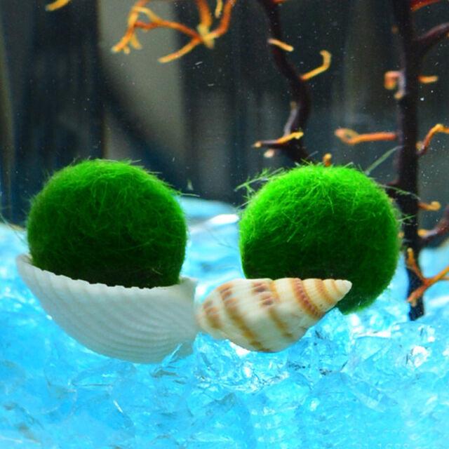 03d851a1316338 Nano Marimo Moss ball-monkey Live aquarium plant fish tank betta sea triops  java