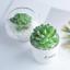 FEPITO-15-Pcs-Artificial-Succulent-Plants-Green-Unpotted-Faux-Flower-Succulents thumbnail 6