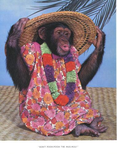 1 Vintage Art Photo Page Chimp Chat 1960/'s Monkey Muu Muu Hawaii Lei Hawaiian