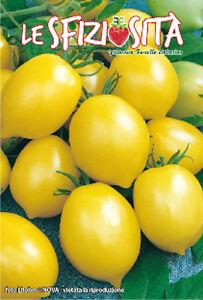 semences-graines-tomate-jaune-pizzuto