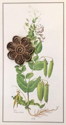 Vtg 1973 Botanic Art Print Edible Plants Ready to Frame *** SEE VARIETY