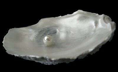 Oyster Dish Jewelry Tray Pearl New Orleans Gift Bridesmaid Trinket Beach Decor Ebay