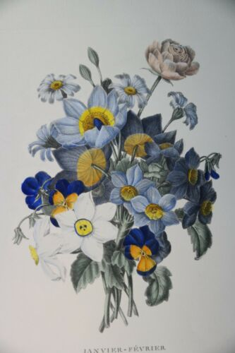 Hand Colored Blue Botanic Flower P.Oudart Janvier-Fevrier Print by P.J Redoule
