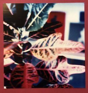Anna JACQUEMARD, Fleur du volta, fotografia, 1990, a mano firmata e datata