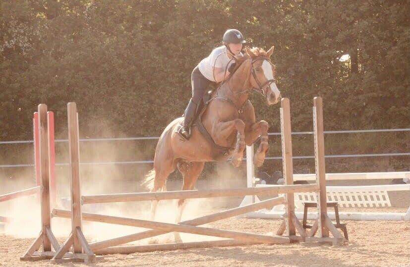 Kommende allround hest