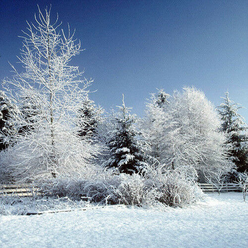 Christmas 10'x10' Computer-painted Scenic Photo Background Backdrop S6648B881