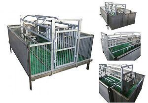 Sala Parto Per Cani : Imperdibile gabbia box sala parto per scofe maiali maialini suini