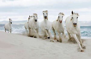 A3 Poster White Horses Running On The Beach Animal Picture