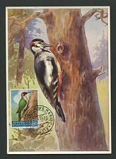 SAN MARINO MK 1960 VÖGEL SPECHT WOODPECKER MAXIMUMKARTE MAXIMUM CARD MC CM d1992