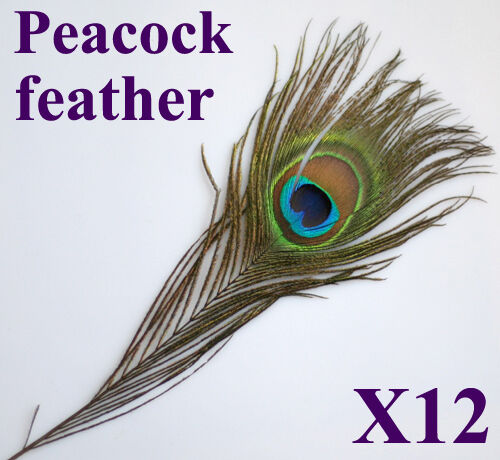 12 Eye Peacock Feathers for Hat Craft Jewelry Clothes Decoration DIY