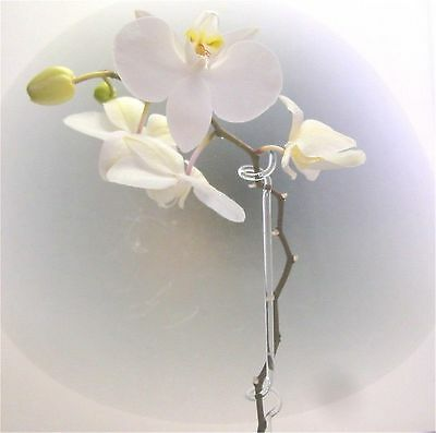 Orchideenstab aus Glas Orchideenhalter extra Lang 55cm Duranglas Top Qualität