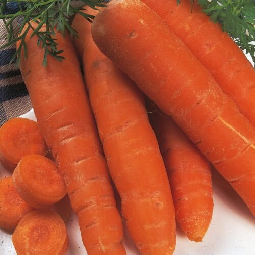 CARROT Seed AUTUMN KING 2 Approx 2000 Seeds Kings Seeds VEGETABLE SEED