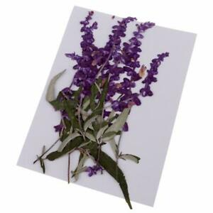 10pcs-Pressed-Real-Dried-Flowers-Purple-Flower-for-Art-Craft-Jewelry-Making