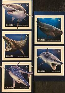 Canada Canada 2018 n. 3637-41 squali pesci cartilagine Pesci Fauna mare abitanti