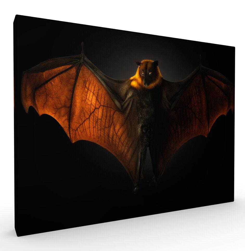 Wings of Desire Wildlife Kunst Drucken by Pedro Jarque, Stretched Canvas