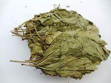 Sang Ye- Folium Mori Mulberry Leaf 100g/3.5 Oz dry herbs Free Shipping