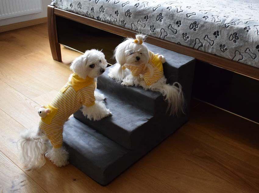 Cani di scale, scale animali cani scale dogszone grigio taglia M