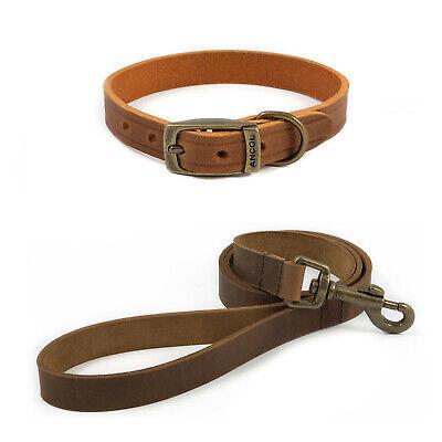 Heerlijk Ancol Latigo Leather Dog Collar Or Lead In 8 Sizes Adjustable Chestnut Brown Om Een Ongewoon Uiterlijk Zeker Te Stellen