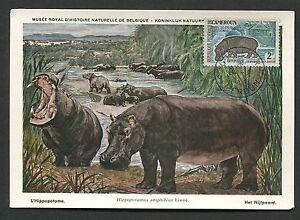 CAMEROUN MK 1963 FAUNA NILPFERD HIPPO MAXICARD CARTE MAXIMUM CARD MC CM d2558