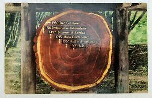 Vintage-Postcard-Mill-Valley-CA-Muir-Woods-REDWOOD-TREE-RINGS-909-AD-RPPC-Calif