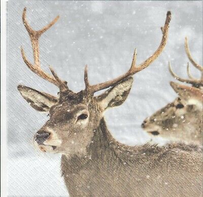 deer Robin design-X208 4 Single paper decoupage napkins winter Christmas
