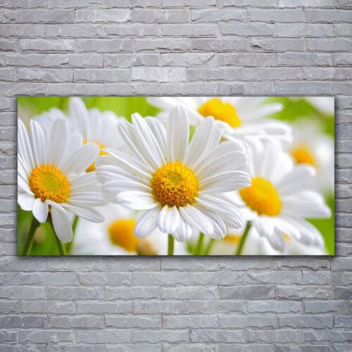 Wandbilder Glasbilder Druck auf Glas 120x60 Gänseblümchen Pflanzen