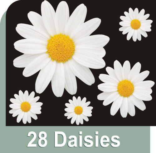 28 White Daisy Flower Decals Car Stickers Graphics Wall Window Decorations