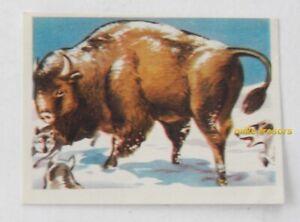 Image CHROMO Chocolat MARTOUGIN N°J4 BISON dans neige Album Chasseurs de Fauves