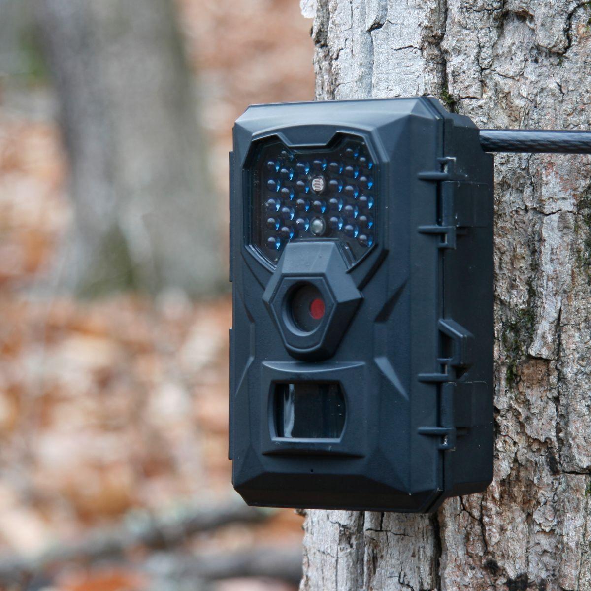 Bester Preis - UWAY U250B IR Scouting Camera w Free Security Box 5 PC Bundle