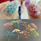 10 Colors 3D Real Dry Dried Flower UV Gel Acrylic Nail Art Tips Decoration DIY