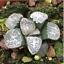 Haworthia-groenewaldii-Succulent-plants-potted-Plants-Home-Garden-Bonsai-Garden thumbnail 6