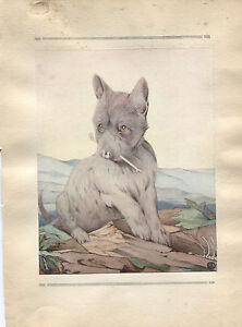 Edward Julius Detmold Vintage Print Scotch Terrier - The Book of Baby Dogs 1929