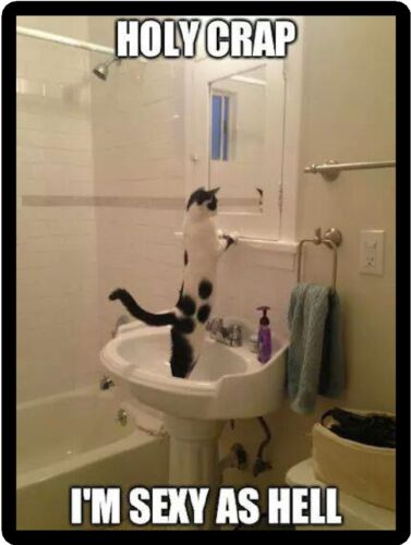 Funny Cat Humor Holy Crap Refrigerator Magnet