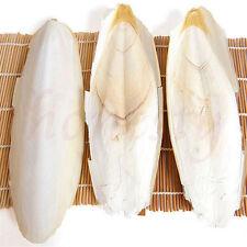 2X Cuttle Fish Cuttlefish Bone For Pet Budgie Birds Reptiles Tortoise Food Best