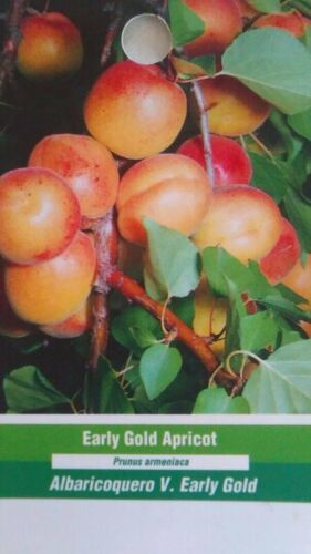 4/'-5/' live EARLY GOLD APRICOT TREE Healthy Fruit Trees Natural Plant Home Garden