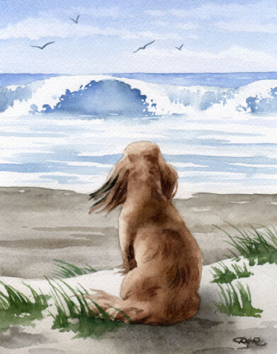 LONG HAIRED DACHSHUND AT THE BEACH Watercolor Dog Art Print by Artist DJR