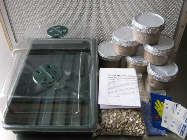 Magic farms oyster mushroom growing kit - 6x grow pots (medium size)