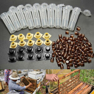 100 Cell Cups Queen Rearing Cupkit System Bee Beekeeping Catcher Box Complete