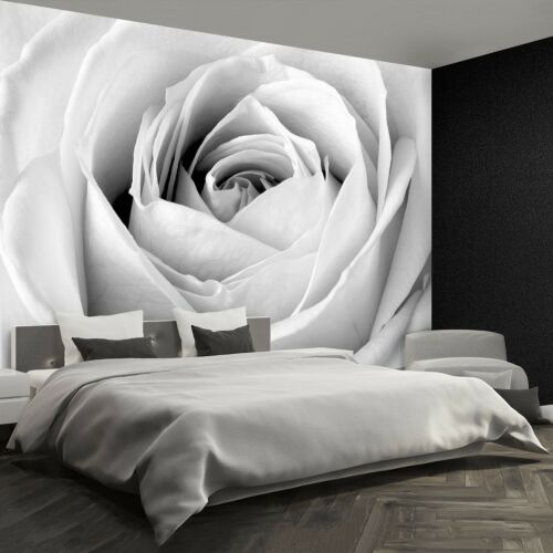 Paper Wall Mural Photo Wallpaper Poster Picture Image White rose