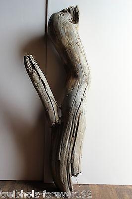 Treibholz/Schwemmholz 1 XXL Skulptur ,Basteln Dekoration Garten Ostern